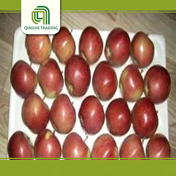 good brand fruit and vegetable price list red star apple with great price