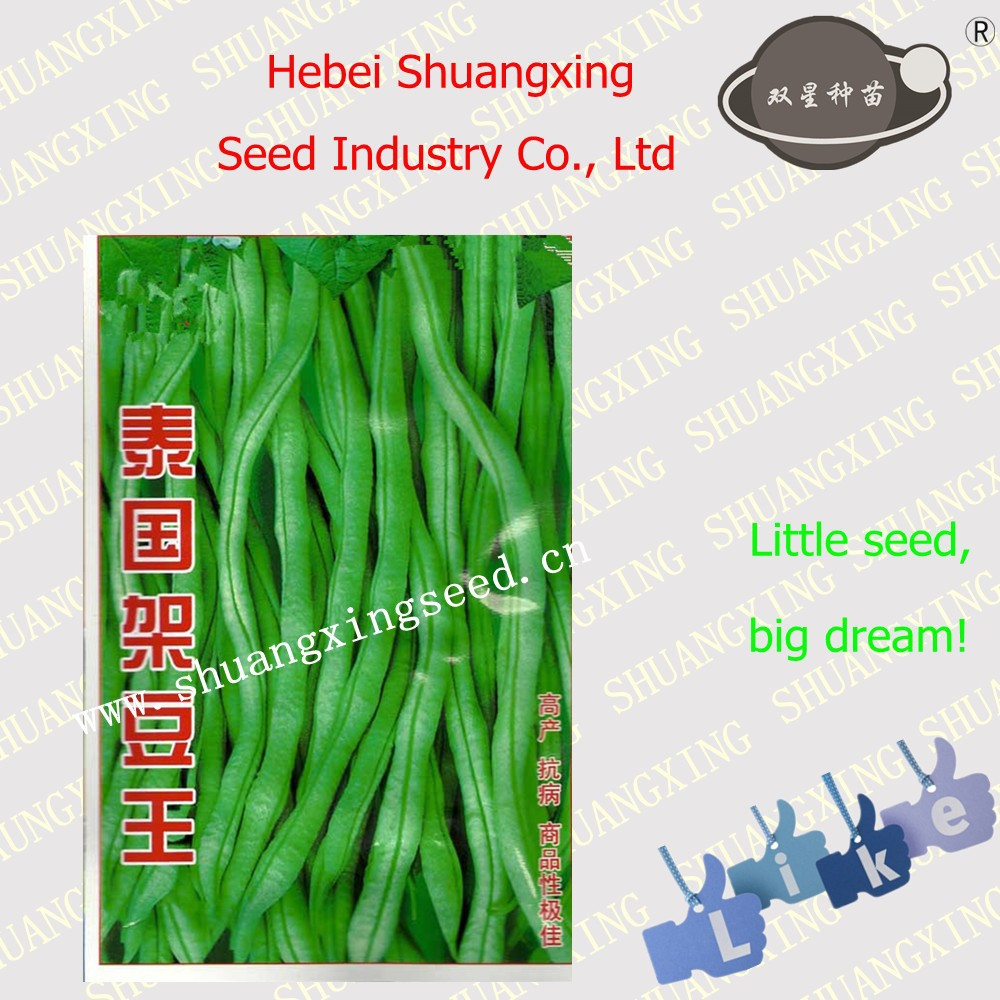 High yield quanlity SX Kidney Bean Seeds No.1408