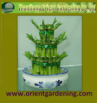 small 3-tier lucky bamboo tower