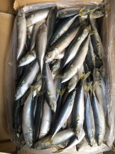 8-10pcs/kg Frozen Pacific Whole Round Mackerel