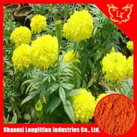 natural colorant Tagetes erecta extract powder/African marigold extract powder Xanthophyll 5%-98% HPLC