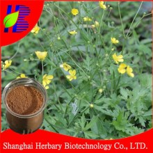 Natural ranunculus ternatus thunb extract