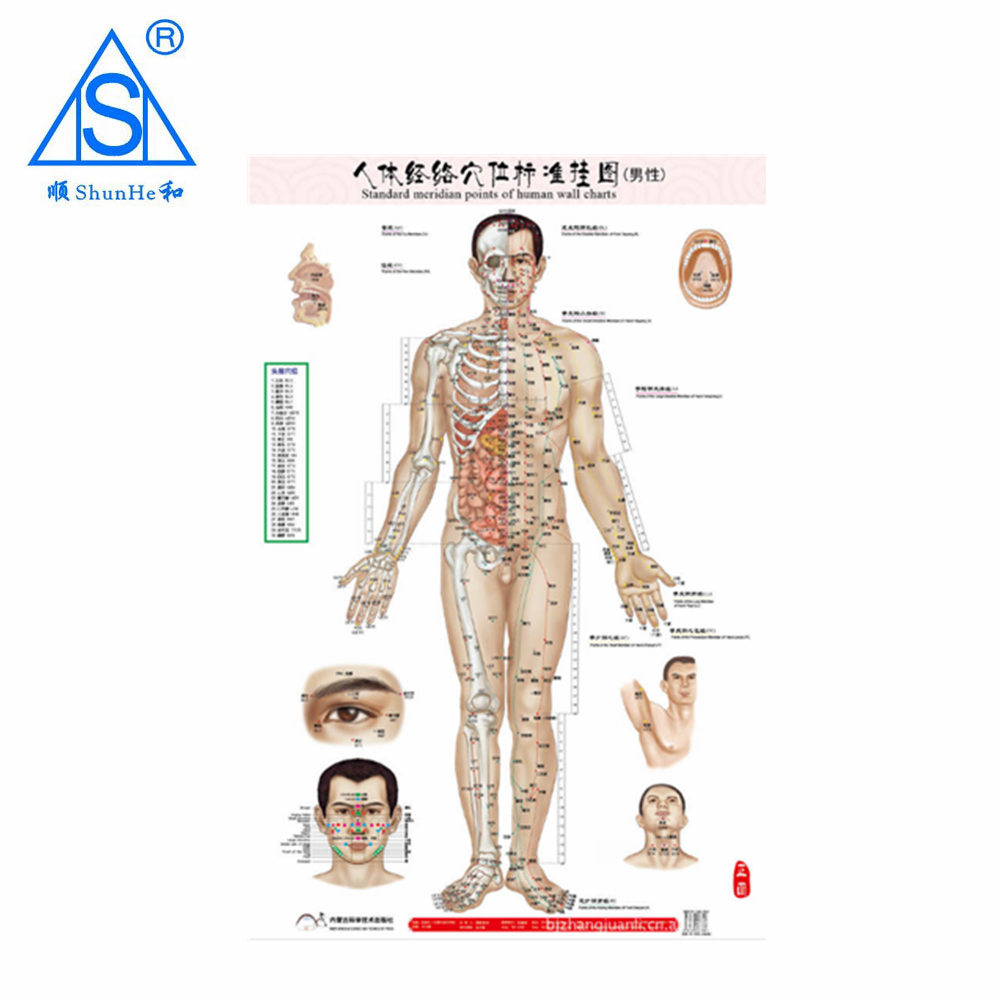 Chinese medical acupuncture points charts