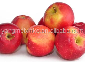 2016 Fresh Chinese Pink Lady apples for sale