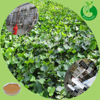 Manufacturer price ivy leaf extract hederagenin