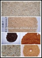 White Broom Corn Millet