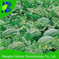 Hot sale hybrid watermelon seed for planting