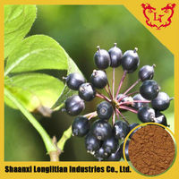 Hot Sale Product Siberian Ginseng Powder Extract / Acanthopanax Rhizome or Root