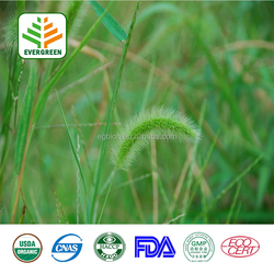 Horsetail Extract 7% Silica,Horsetail Powder,Horsetail Extract Plant Extract