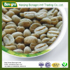 green coffee/unroasted coffee beans
