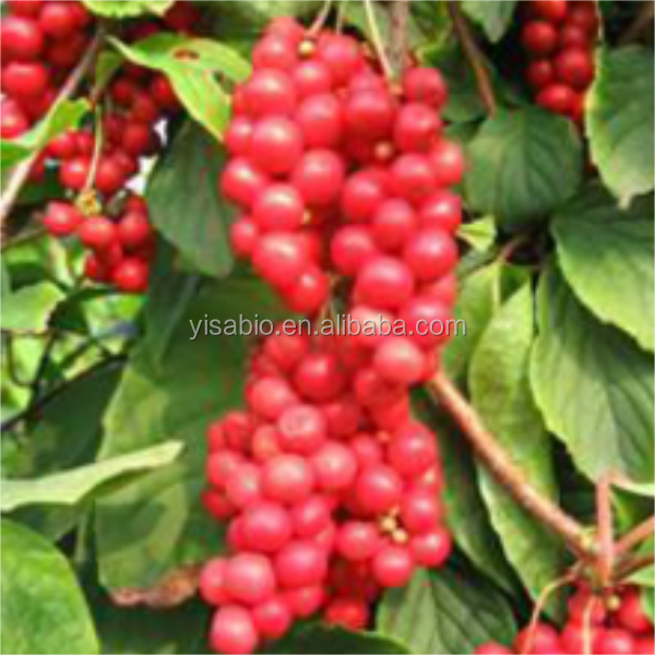 High quality Schisandra berries P.E.