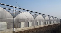 Plastic Film Multi Span Greenhouse for Tomato Vegetable and flower Greenhouse hot sale greenhouse for farming