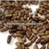 jue ming zi herb medicine cassia seed tea