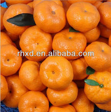 fresh mandarin <strong>orange</strong> chinese Citrus fruits