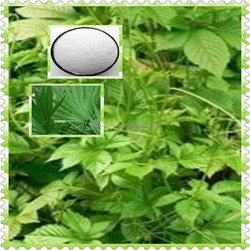 Saw Palmetto Plant Powder Extract