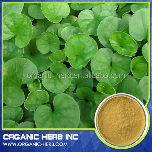 Asiaticoside powder gotu kola extract / gotu kola herb extract