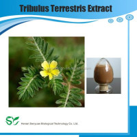 High Quality Tribulus Terrestris Fruit Extract Powder