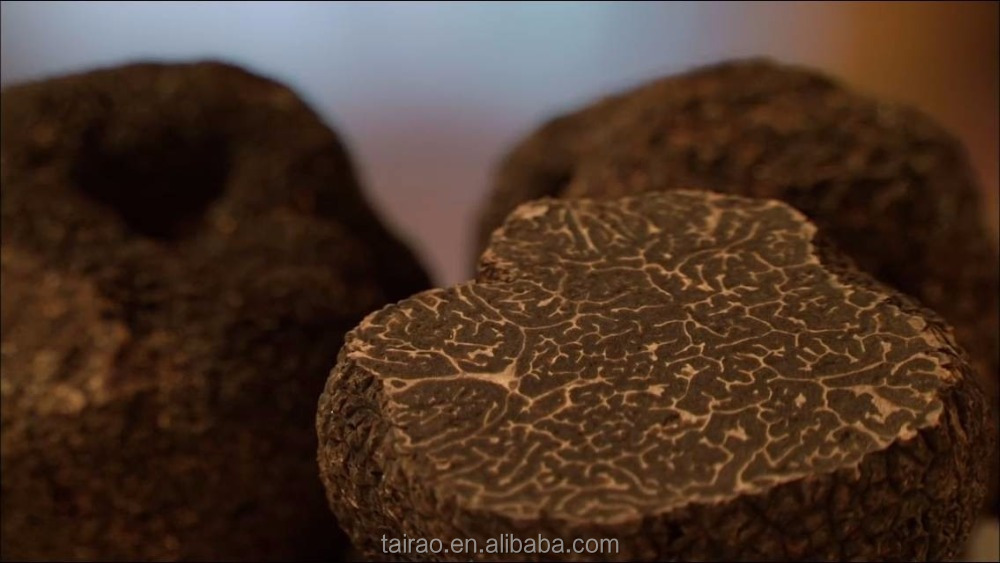 Export to Italian truffle wholesale truffles and mushrooms for sale truffle mushroom