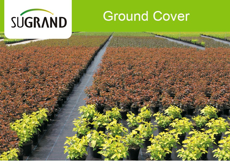 Pe Ground Cover Seeds For Greenhouse