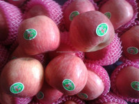 fresh Fuji apple of new crop