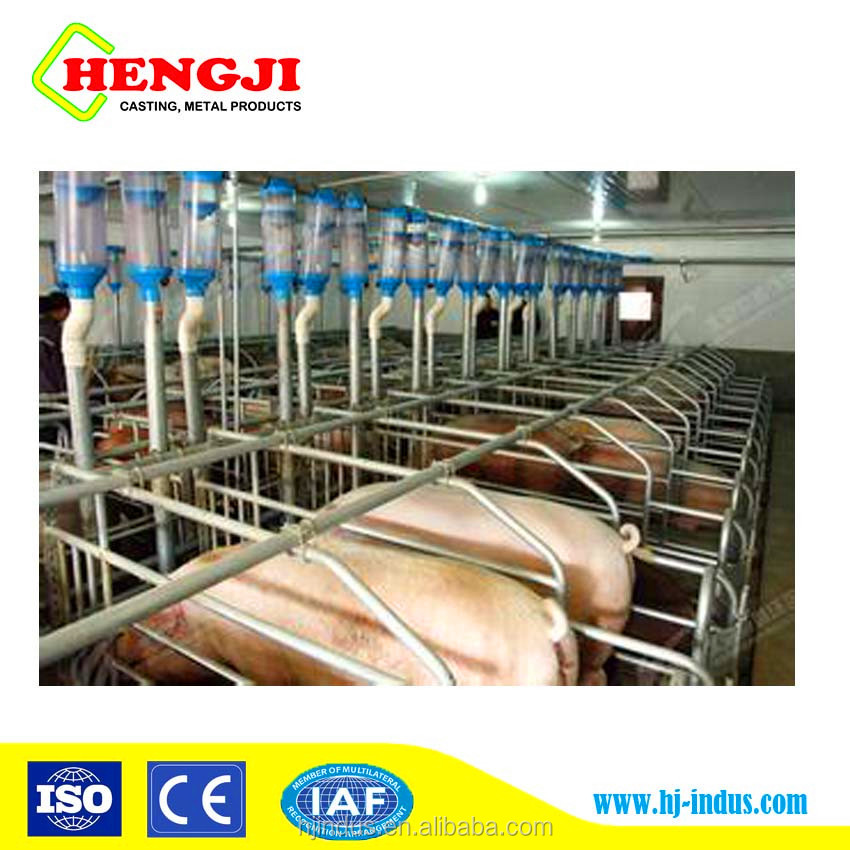 Galvanized pipe pig gestation stalls