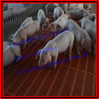 2.2*1.8m Piglet crate for piglet nursery