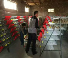 Automatic quail farm cage New design quail layer cage for quail farming