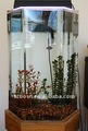 Automatic Acrylic Fish Aquarium