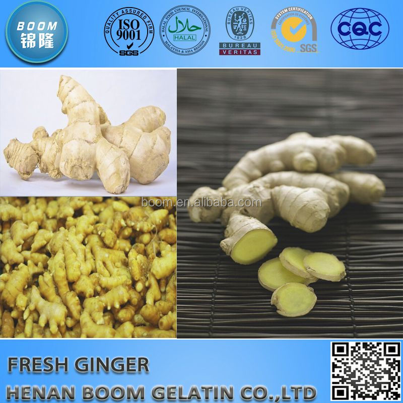 Fresh Ginger for Middle East