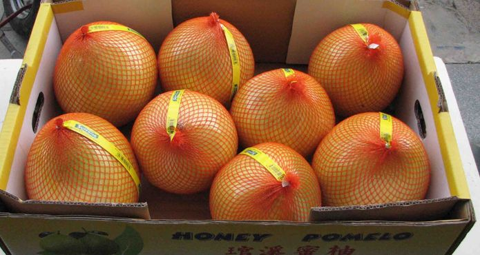 Lowest Factory Price of Honey Pomelo <strong>Fruits</strong>