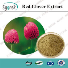 High Quality Natural Red Clover Flower Extract