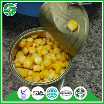 Professional team new season sweet vegetable corn canned from china