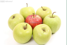 New Crop Chinese fresh bulk yellow apple best price fruit exporter in China apple fruit price