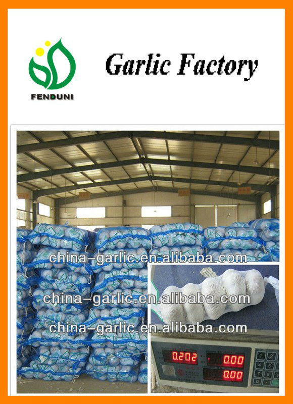 """ Best 6cm Europe Garlic in China"""
