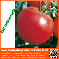 OU BAO YI HAO best high yield red tomato seeds