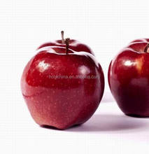 hot sale high quality washington red delicious apples