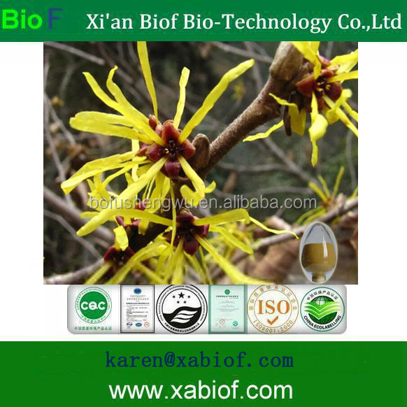 Pure Natural Witch Hazel Extract Powder Hamamelis Virginiana Extract