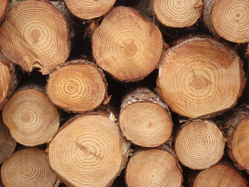 Pine Logs From South Africa