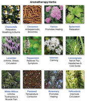 Herbs and Herbal Essential Oils