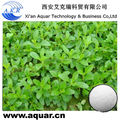 Natural high purity sweetener Stevia Extract