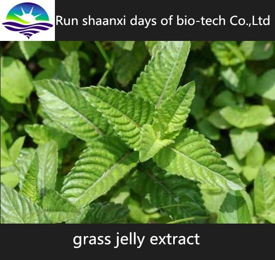 KOSHER Certified Grass Jelly Extract 10:1 Powder, Plant Extract from Mesona Chinensis