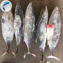 frozen tuna fish frozen bonito skipjack tuna whole round seafrozen 100% NW