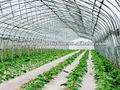 Transparent Agricultural greenhouse film