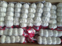 2013 new crop indian fresh garlic