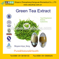 GMP Manufacture Supply Natural Green Tea Extract / Camellia sinensis Extract