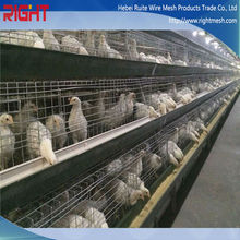 quality products breeds of broiler chickens