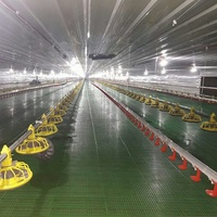 Automatic Broiler Chicken Farm Equipment Poultry From China Supplier