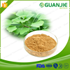 Professional Factory Direct Supply Ginkgo Biloba Leaf Extract