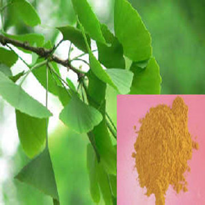 Ginkgo Biloba Extract,24.0% Flavones,6.0%Lactones,high quality in bulk stock,GMP manufacture,welcome inquiry