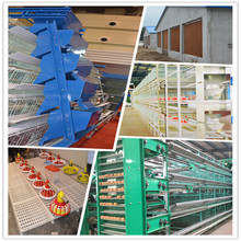 5000-100000 chicken cages full automatic poultry farm equipment for sale with free professional design chicken house